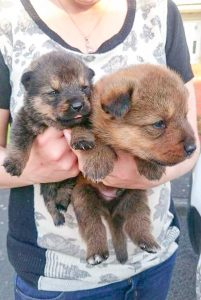 Two of the pupies finally safe.